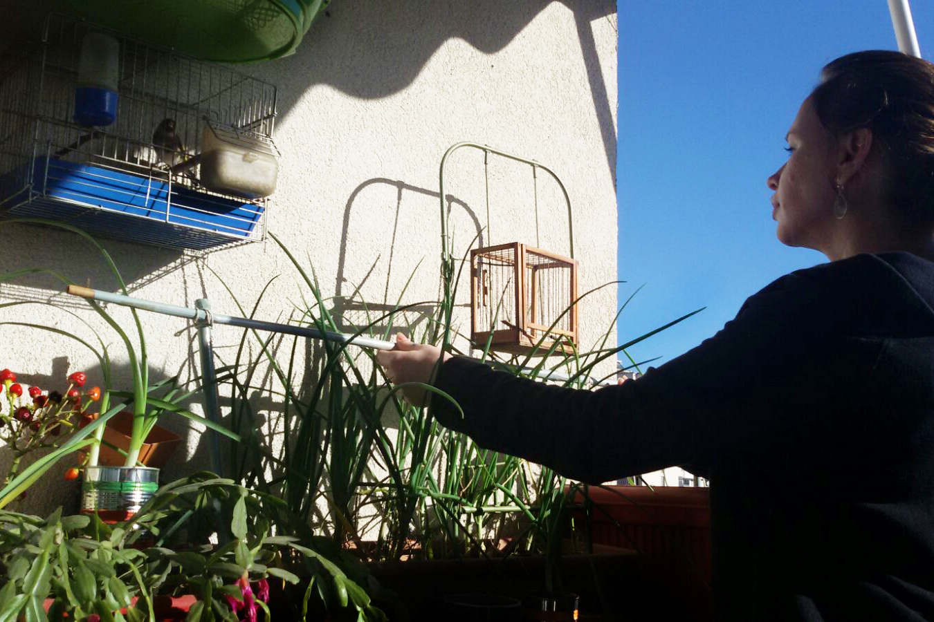 Rezarta, taking care of the products planted in her balcony