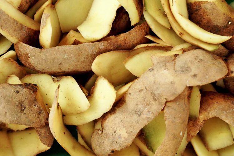 Si Të Mbuloni Thinjat Duke Përdorur Lëkurat E Patateve - AgroWeb